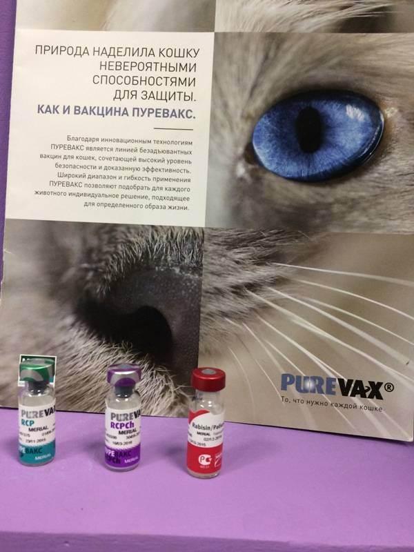 Пуревакс - вакцина от инфекций кошек. инструкция по применению пуревакса кошкам (состав, показания, противопоказания, дозы, схема прививок)