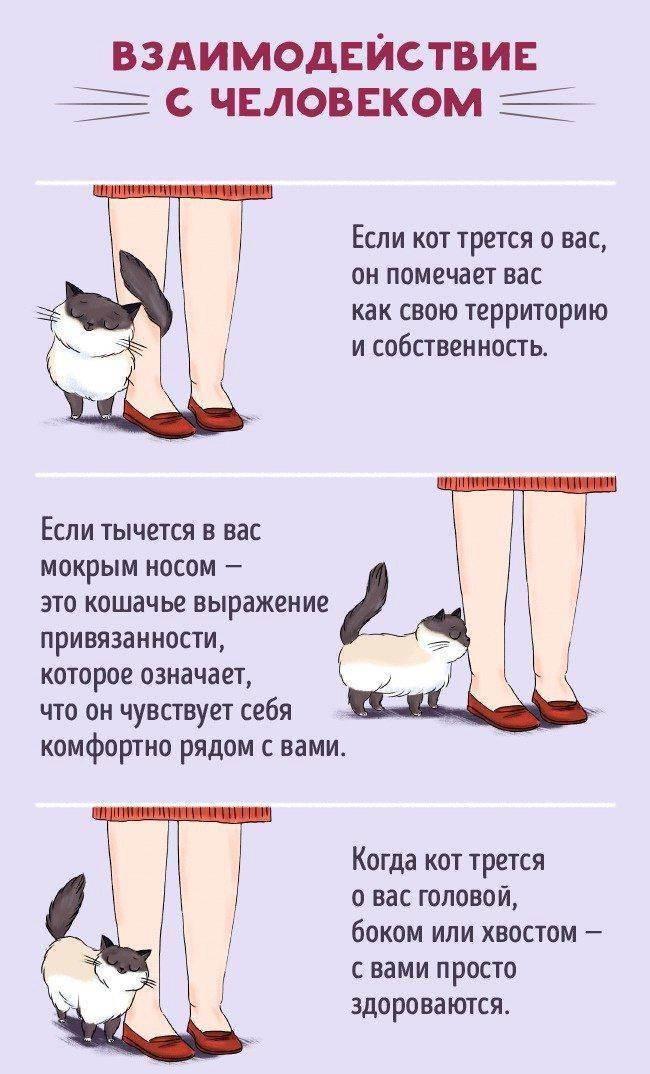 Как понять язык кошек: вербальное и невербальное общение