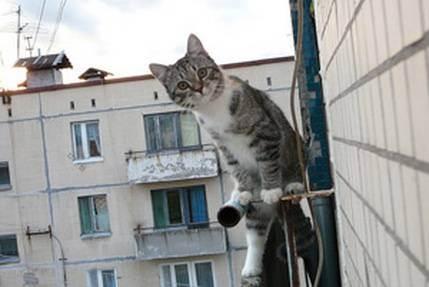 Что делать, если кошка упала с большой высоты?
