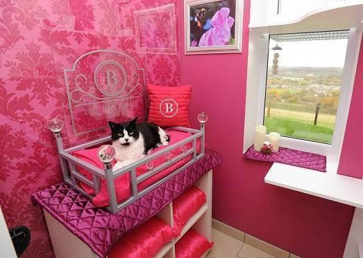 Как выбрать гостиницу для кошки | кошачий ковчег