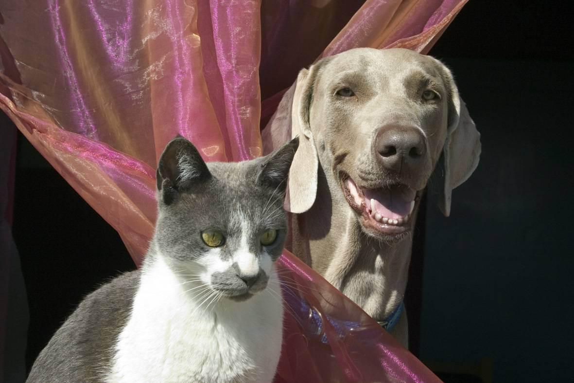 Кто лучше собака или кошка: плюсы, кого выбрать, минусы