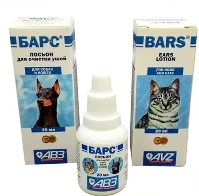 Болезни ушей у кошек: симптомы, лечение, фото болезни ушей у кошек: симптомы, лечение, фото