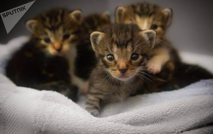 Самая дорогая кошка в мире: фото, порода, топ-10, ашера, видео