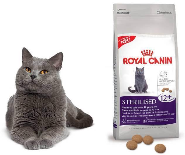 Чем кормить британского котенка и взрослого кота: выбор типа питания