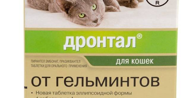Котэрвин для кошек и котов: состав, цена, инструкция по применению и аналоги