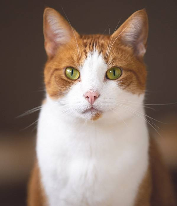6 советов по купанию кошек