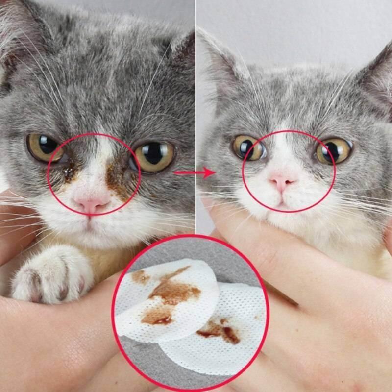 Как чистить уши котенку? вопросы и ответы | рутвет - найдёт ответ!