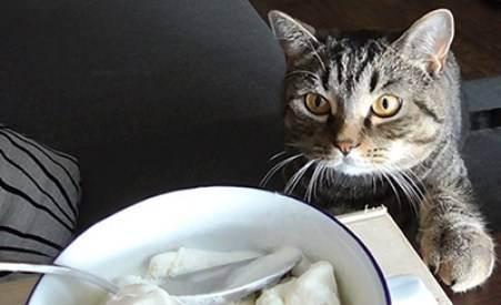 Если котёнок съел наполнитель для туалета