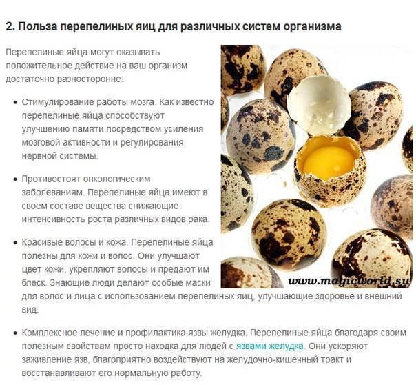 Можно ли давать котенку вареное яйцо и в каком количестве?