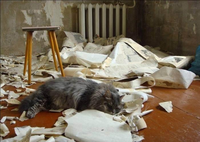 Зачем кошки сбрасывают вещи на пол и как с этим бороться