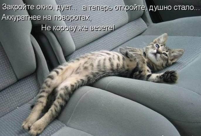 Как перевозить кошку в машине? | все про путешествия с животными