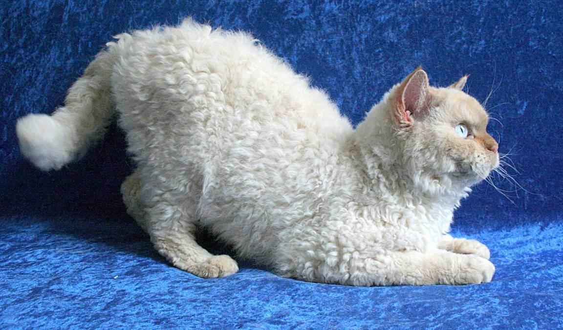 Кудрявые собаки — перечень пород с кучерявой шерстью, фото