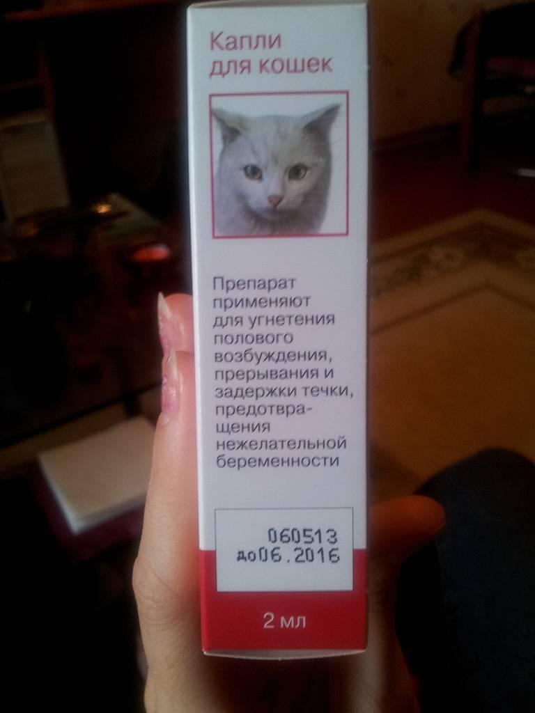Капли для кошек во время течки
