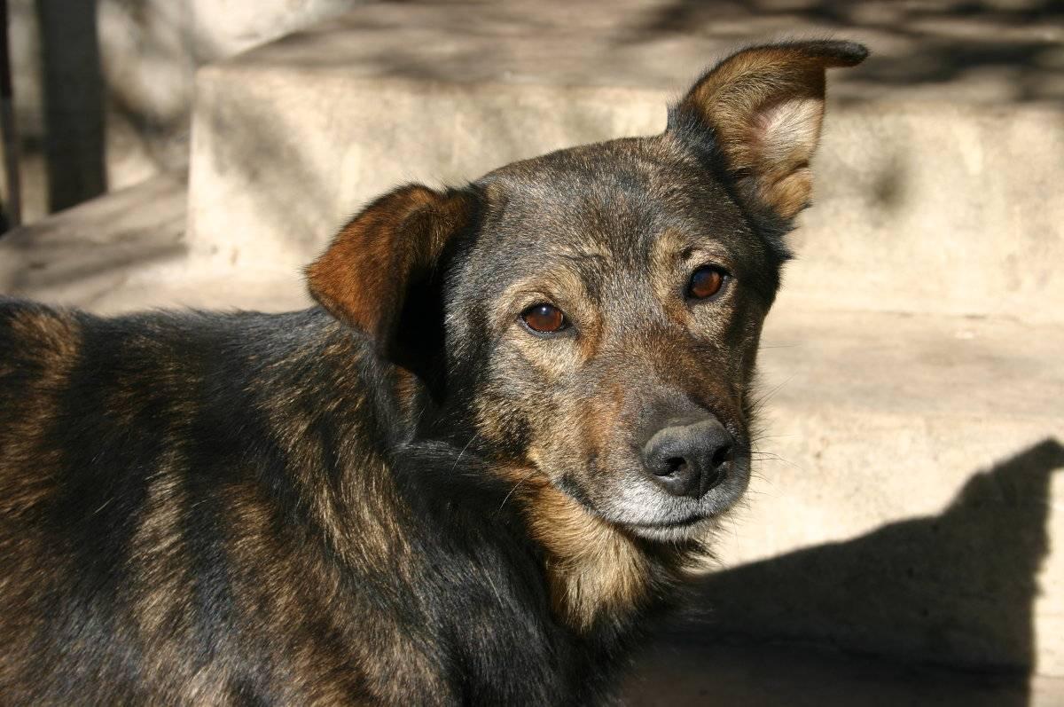 Порода собак двортерьер: фото, описание породы и характер