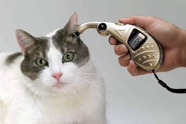 Как измерить температуру кошке: практические советы