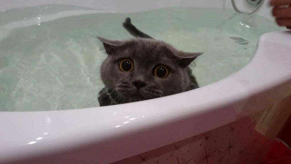 Как приучить кошку к воде: основы и правила как приучить кошку к воде: основы и правила