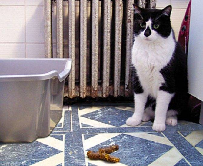Кот метит территорию в квартире, кошка писает где попало во время точки – что делать, как отучить?