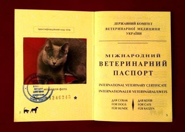 Образец заполнения паспорта кошки. как сделать и заполнить паспорт кошке, взрослой и беспородной, из личного опыта