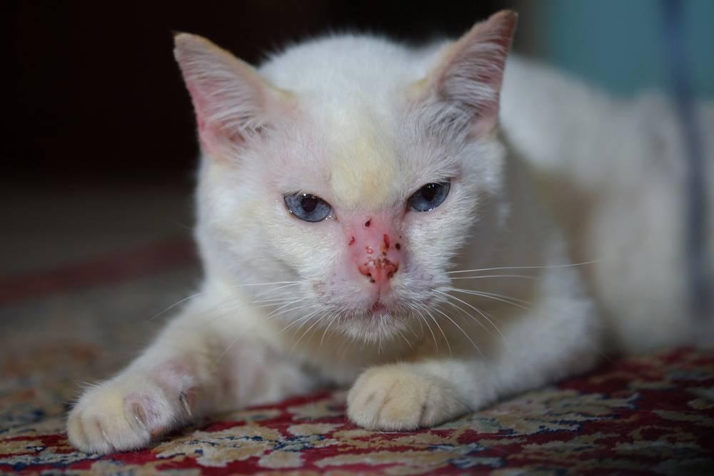 Что делать, если котенок не ест и не пьет? в чем причина, и как помочь котенку, если он не ест и не пьет - автор екатерина данилова - журнал женское мнение