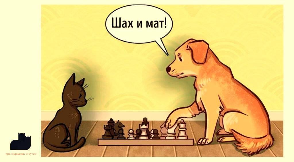 Кто умнее, кошки или собаки?