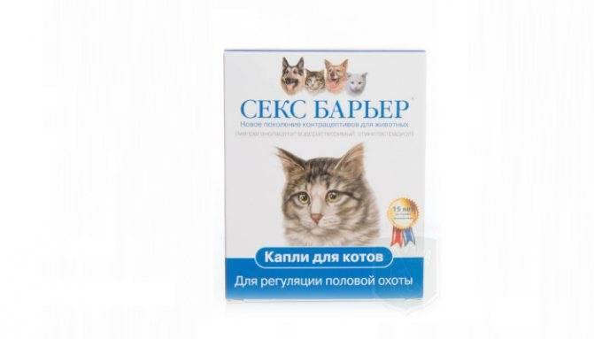 Кошка во время течки: что чувствует кошка в этот период и ее поведение, успокаивающие капли и другие средства