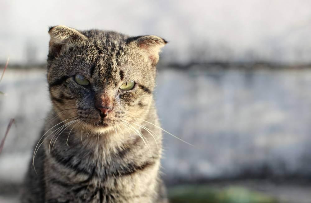 Как определить возраст котёнка: полезные советы для хозяев
