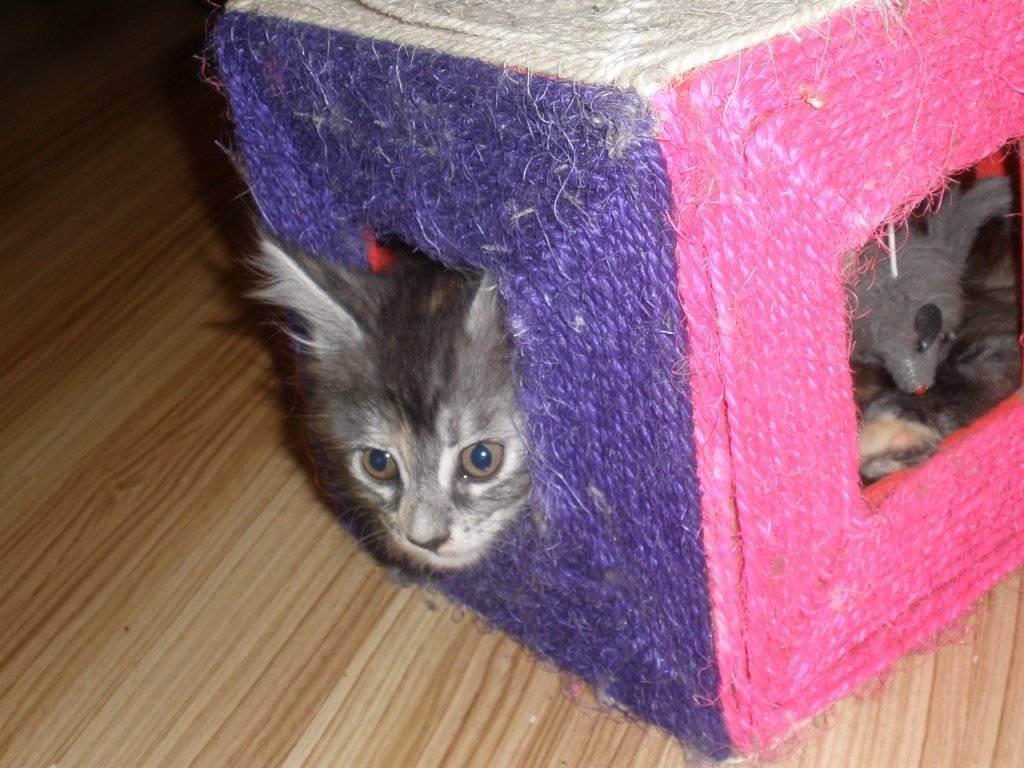 Как помочь котенку адаптироваться в новом доме