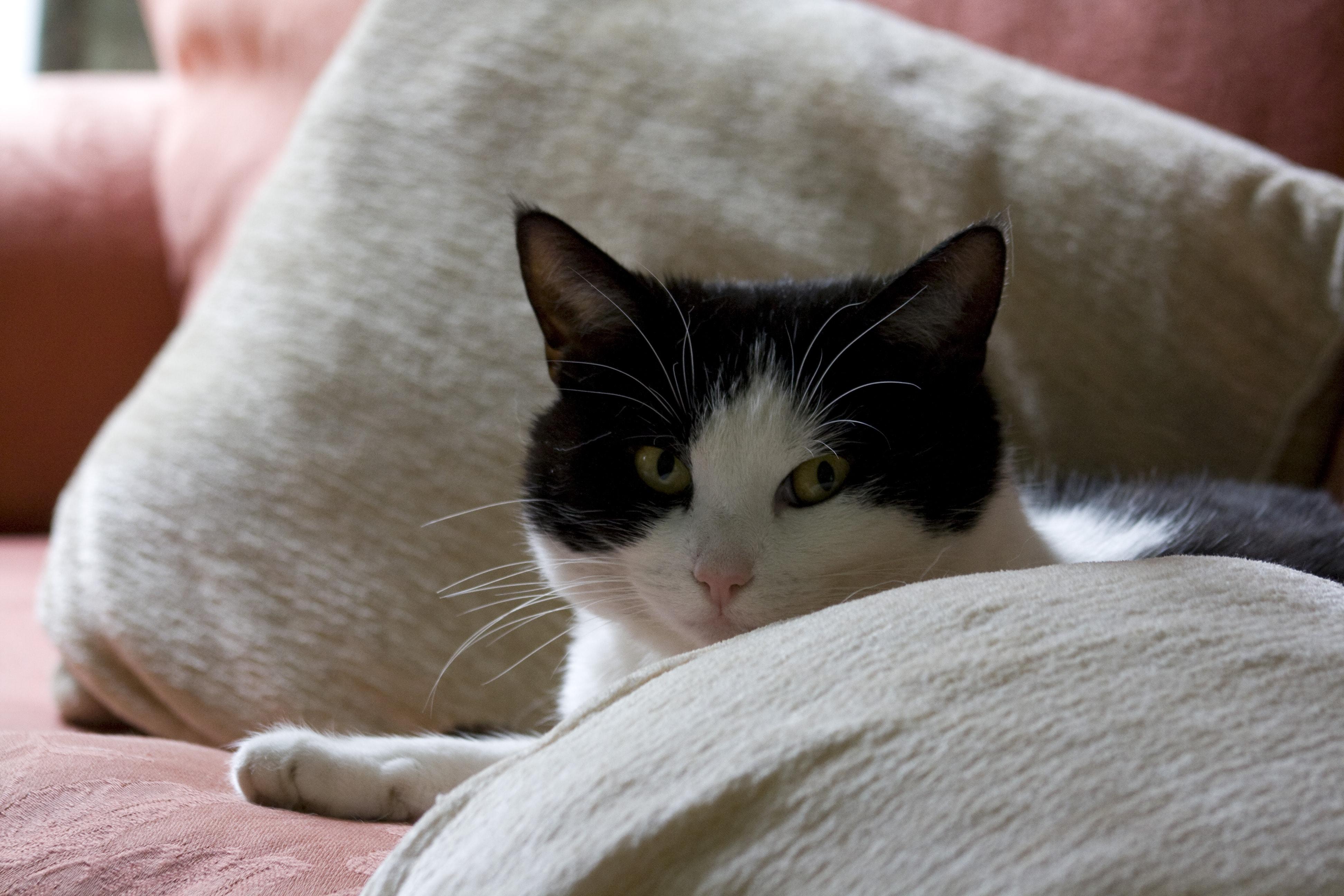 Симптомы стресса у кошек
