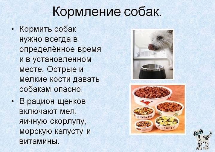 Можно ли давать кошке сухой корм после отравления