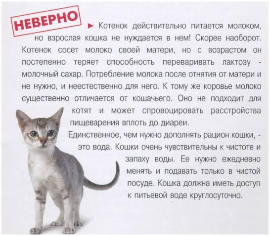 Высокая температура у кошек - симптомы, лечение, препараты, причины появления | наши лучшие друзья
