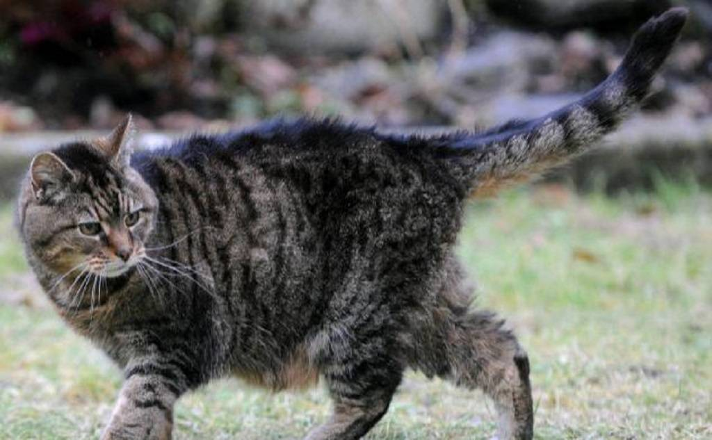 Топ-6 кошек-долгожителей и способы пополнить ряды рекордсменов