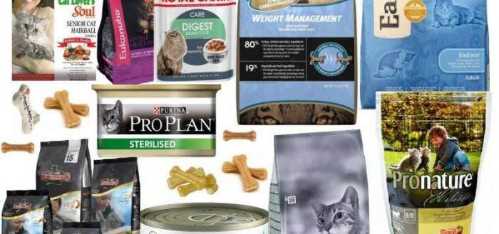 Как выбрать самый лучший сухой корм для кошек