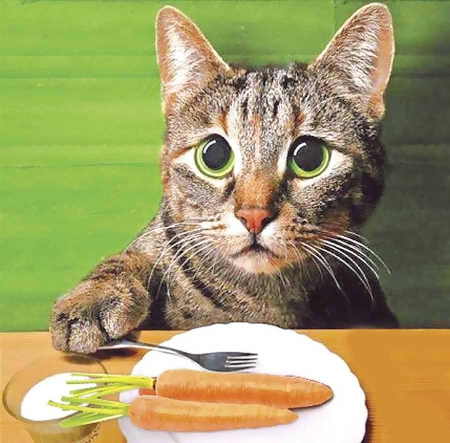 Как откормить кота