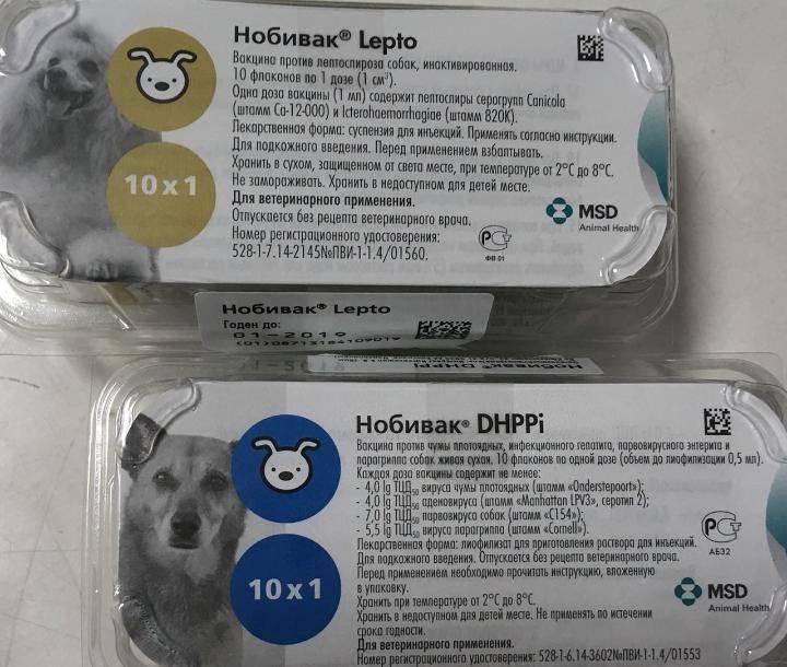 Вакцина нобивак (nobivac) для кошек: инструкция по применению