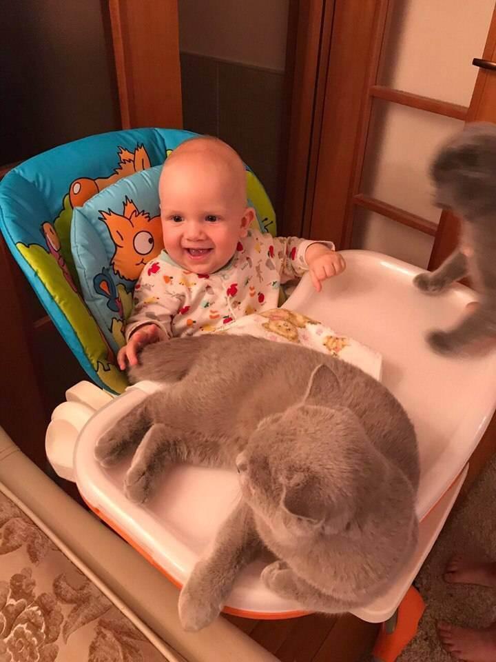 Кошка и новорожденный в доме - кот и новорожденный ребенок - запись пользователя антошка (id1600323) в сообществе домашние животные в категории дети и животные - babyblog.ru