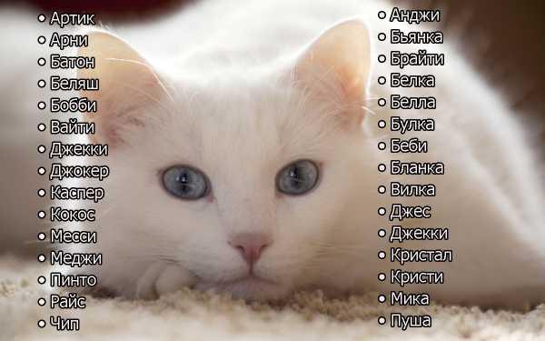 Смешные имена для кошек и котов