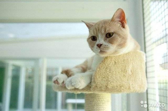Что такое передержка кошек?