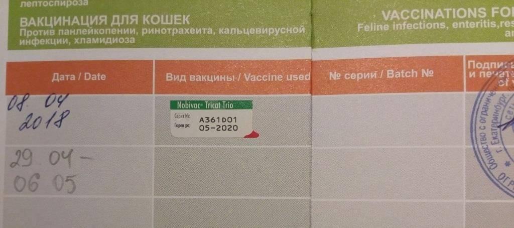 Когда котятам надо делать прививки мейн кун
