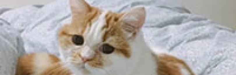 Почему у кота текут слюни