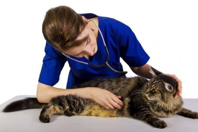 Как вылечить кота: причины заболеваний, симптомы, методы лечения, профилактика