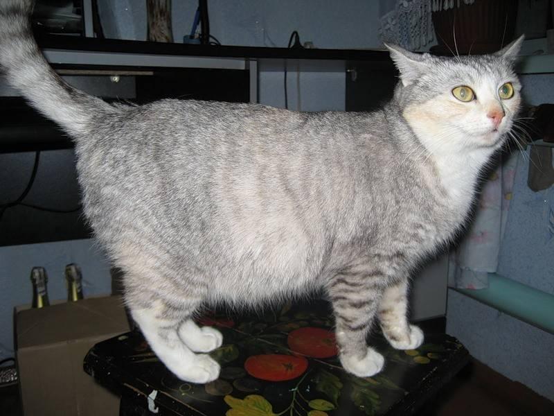 У котёнка большой живот: стоит ли опасаться за его здоровье