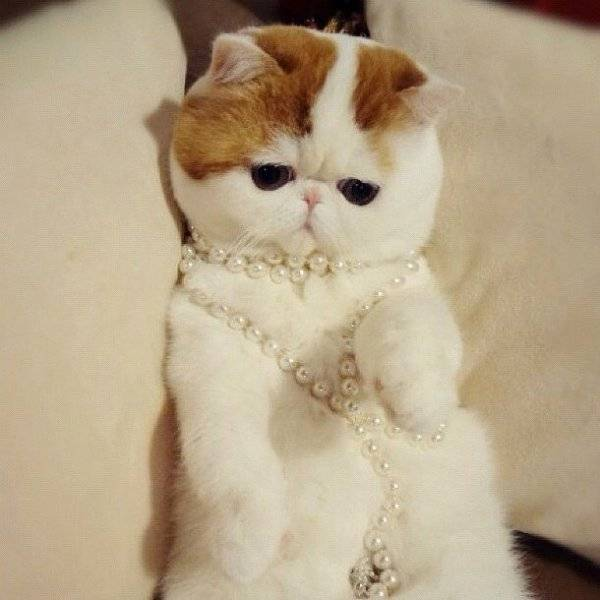 Самые красивые кошки в мире: смотрите рейтинг самых милых пород | сайт о домашних животных