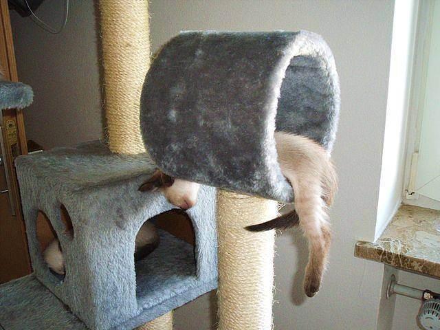Как сделать домик для кошки своими руками - выбор конструкции, уникальные советы, идеи и фото примеры