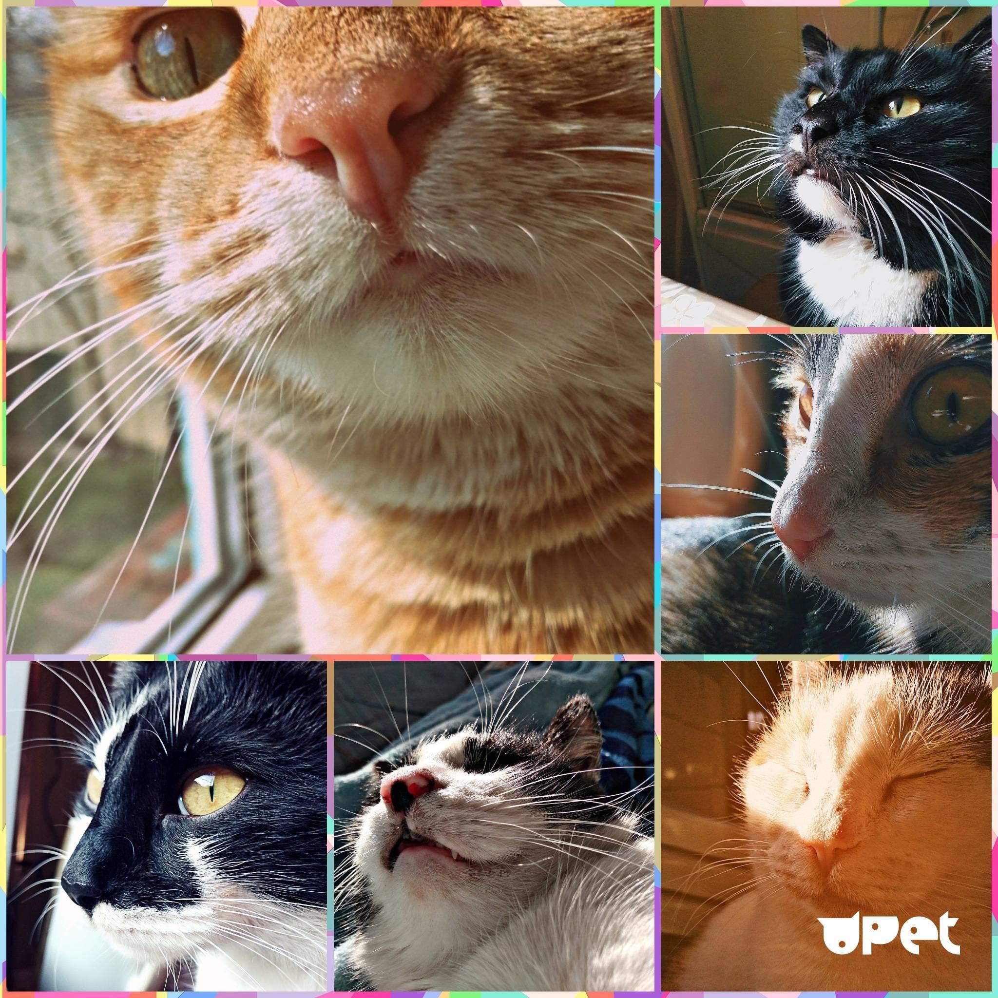 Сухой и тёплый нос у кота: здоров или болен
