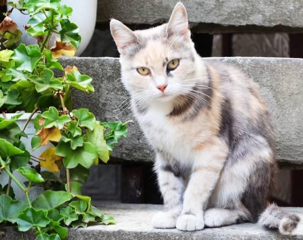 Чёрные кошки: правила приобретения и особенности содержания