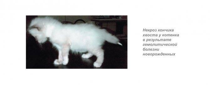 У кошки падает температура. пониженная температура у кота