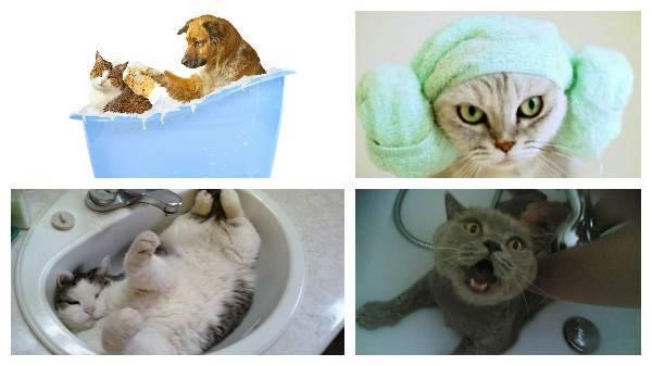 Почему беременным нельзя убирать кошачий туалет?