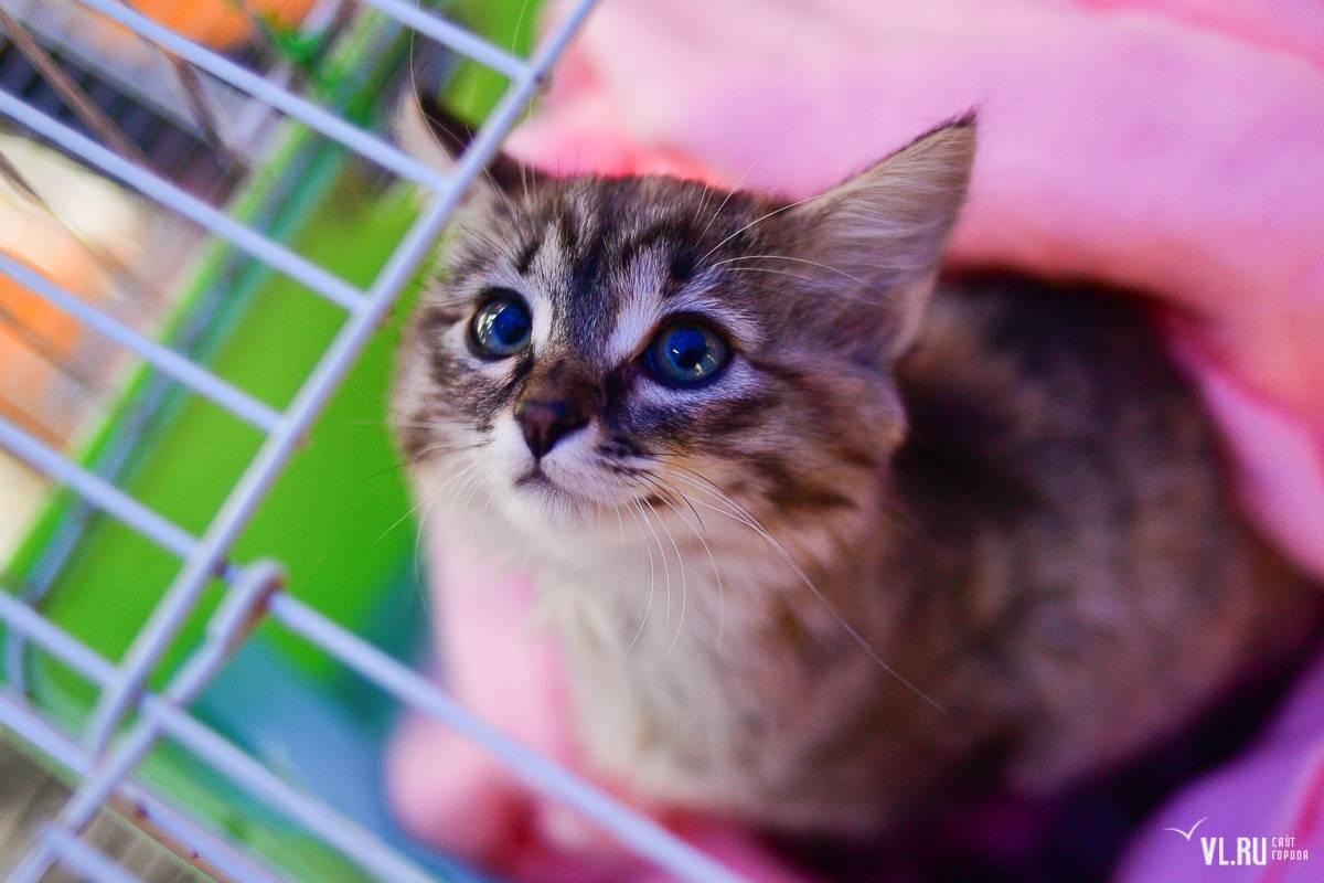 Выставки кошек: зачем нужны и стоит ли принимать участие