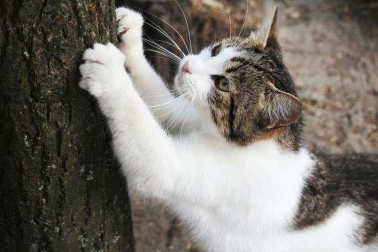 Признаки того, что кошка чувствует боль