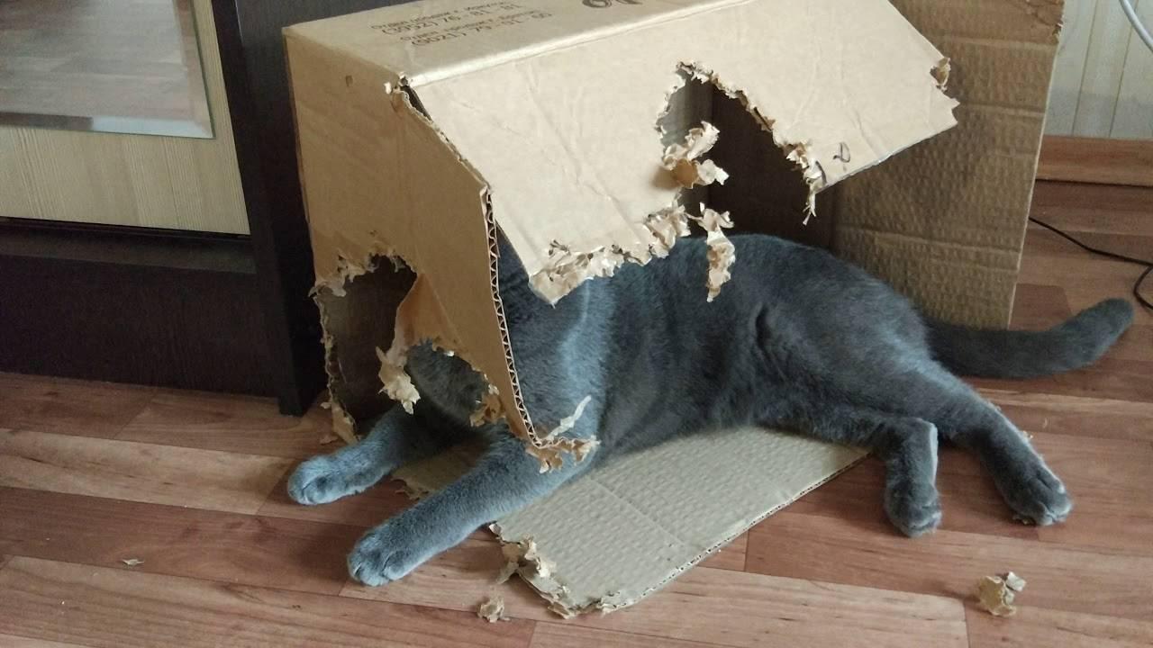 Что сделать чтобы кот не драл обои и мебель: советы ветеринара
